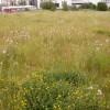 Site Biodiversity Action Plans